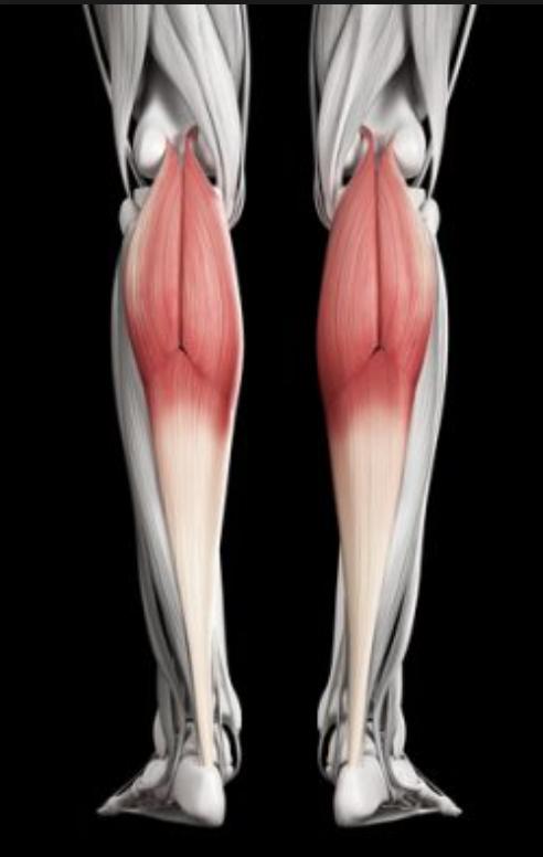膝の痛みの原因筋