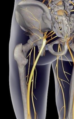 腰から下の神経について